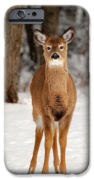 Whitetail In Snow IPhone 6s Case by Christina Rollo