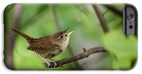Wild Birds - House Wren IPhone 6s Case by Christina Rollo