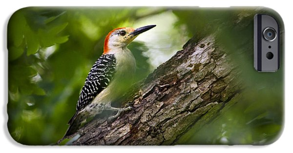 Red Bellied Woodpecker IPhone 6s Case by Christina Rollo