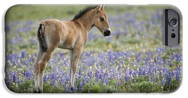 Wild Horses-animals-image-12 IPhone Case by Wildlife Fine Art