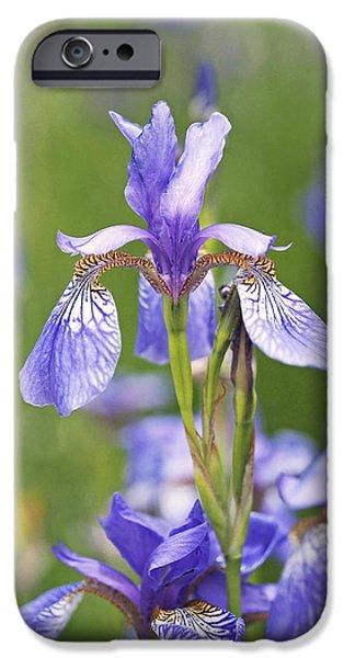 Wild Irises IPhone 6s Case by Rona Black