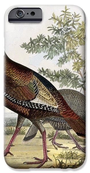 Wild Turkey IPhone 6s Case by Titian Ramsey Peale
