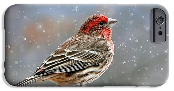 Winter Finch Christmas Art IPhone Case by Christina Rollo