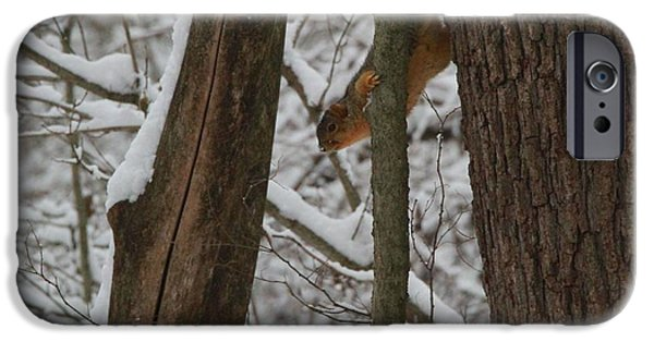 Winter Squirrel IPhone 6s Case by Dan Sproul
