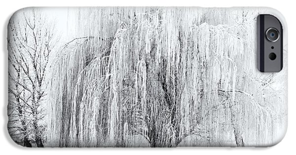 Winter Willow IPhone Case by Mike  Dawson