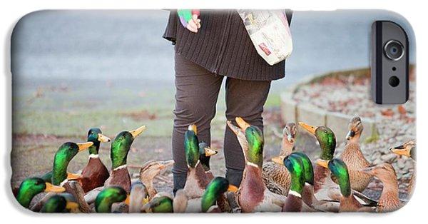 Woman Feeding Mallard Ducks IPhone Case by Ashley Cooper