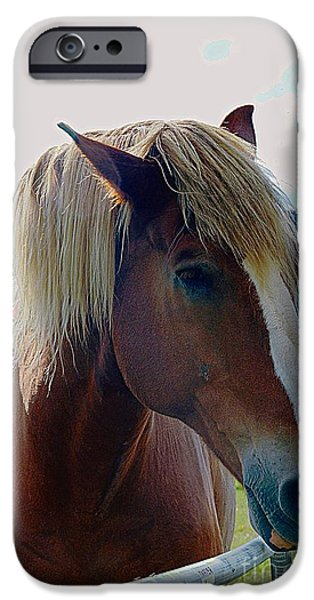 Wonderful Horse IPhone Case by Kathleen Struckle