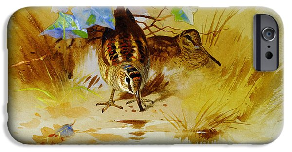 Woodcock In A Sandy Hollow IPhone 6s Case by Celestial Images