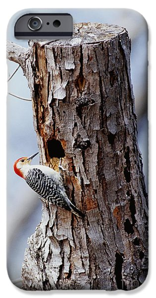 Woodpecker And Starling Fight For Nest IPhone 6s Case by Gregory G. Dimijian