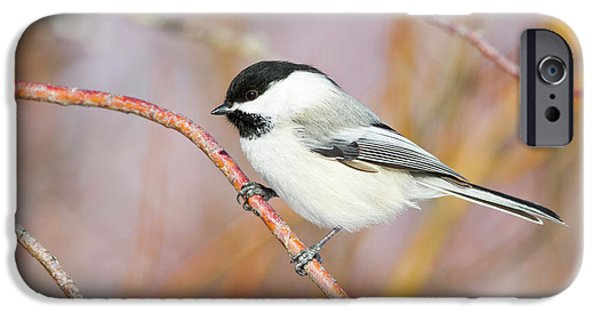 Wyoming, Sublette County, Black-capped IPhone 6s Case by Elizabeth Boehm