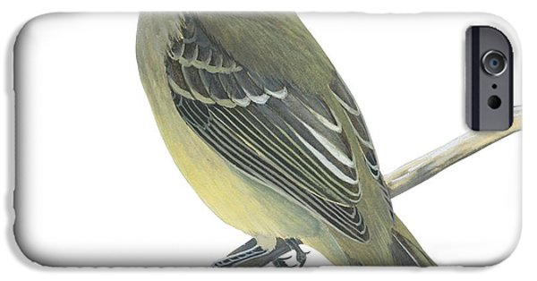 Yellow Bellied Elaenia  IPhone Case by Anonymous
