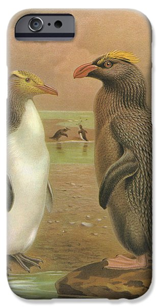 Yellow Eyed Penguin And Snares Crested Penguin  IPhone Case by J G Keulemans