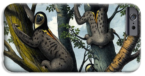 Yellow Throated Sloth IPhone Case by Splendid Art Prints