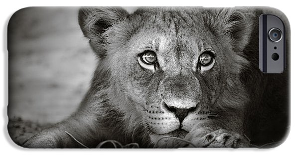Young Lion Portrait IPhone Case by Johan Swanepoel