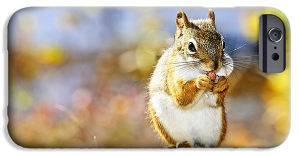 Red Squirrel IPhone 6s Case by Elena Elisseeva