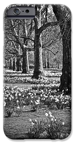 Daffodils In St. James's Park IPhone Case by Elena Elisseeva