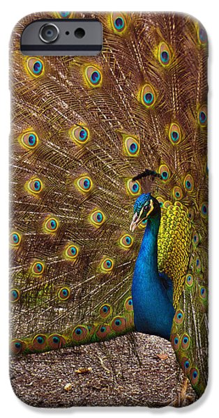 Peacock IPhone Case by Carlos Caetano
