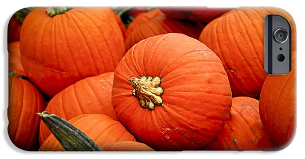 Pumpkins IPhone Case by Elena Elisseeva