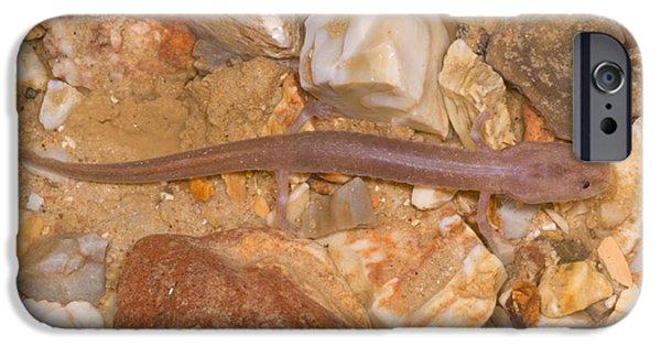 Ozark Blind Cave Salamander IPhone 6s Case by Dante Fenolio