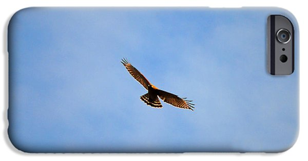 Red Shouldered Hawk In Flight IPhone 6s Case by Jai Johnson