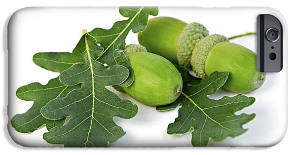 Acorns With Oak Leaves IPhone Case by Elena Elisseeva
