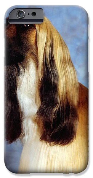 Afghan Hound IPhone Case by The Irish Image Collection