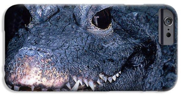 African Dwarf Crocodile IPhone 6s Case by Dante Fenolio