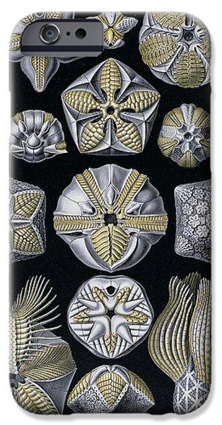 Artforms Of Nature IPhone Case by Ernst Haeckel