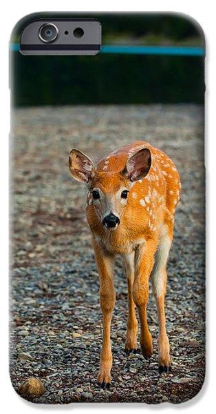 Bambi IPhone Case by Sebastian Musial