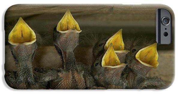 Barn Swallow Hirundo Rustica Chicks IPhone Case by Cyril Ruoso