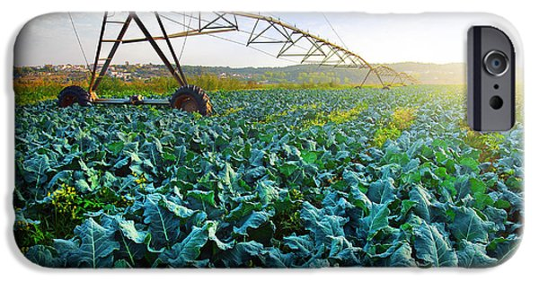 Cabbage Growth IPhone 6s Case by Carlos Caetano