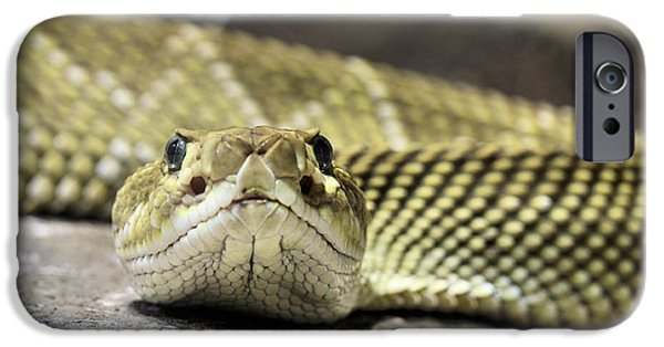 Crotalus Basiliscus IPhone Case by JC Findley