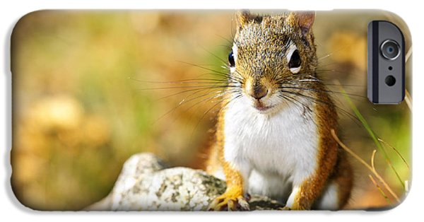 Cute Red Squirrel Closeup IPhone 6s Case by Elena Elisseeva
