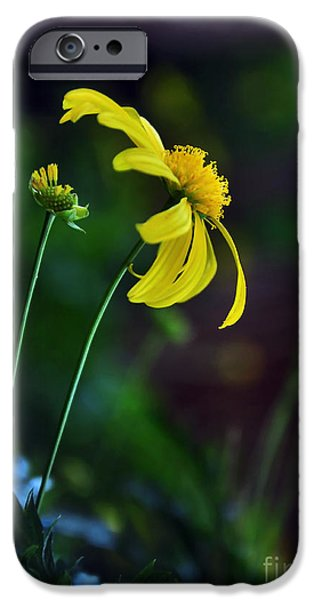 Daisy Profile IPhone Case by Kaye Menner