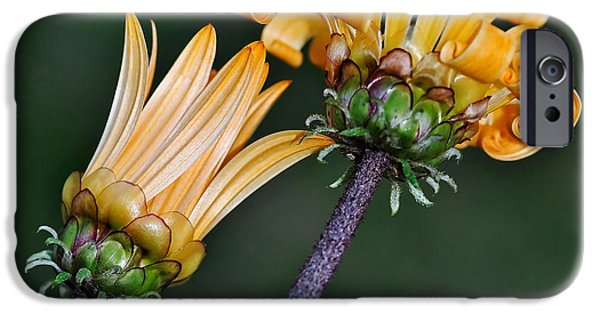 Elegant Daisies IPhone Case by Kaye Menner