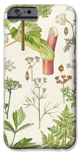 Garden Angelica And Other Plants  IPhone Case by Elizabeth Rice