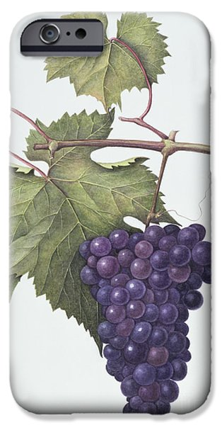 Grapes  IPhone 6s Case by Margaret Ann Eden