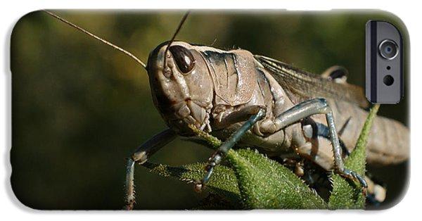 Grasshopper 2 IPhone 6s Case by Ernie Echols