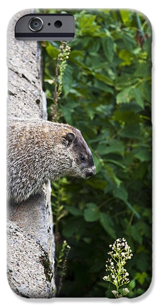 Groundhog Day IPhone 6s Case by Bill Cannon