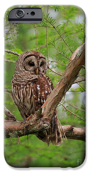 Hoot Owl IPhone Case by Louise Heusinkveld