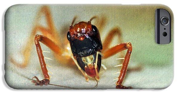 Jiminy Cricket 2 IPhone 6s Case by Kaye Menner