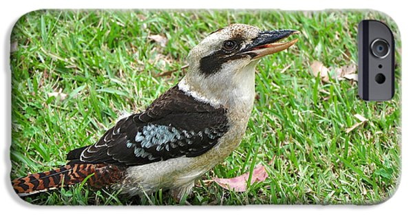 Laughing Kookaburra IPhone 6s Case by Kaye Menner
