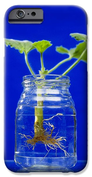 Plant Cutting Growing Roots IPhone Case by Andrew Lambert Photography