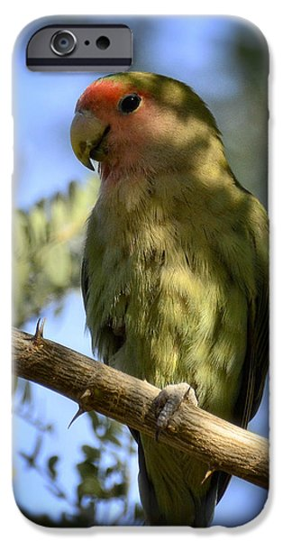 Pretty Bird IPhone 6s Case by Saija  Lehtonen