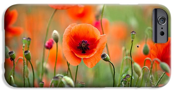 Red Corn Poppy Flowers 05 IPhone Case by Nailia Schwarz