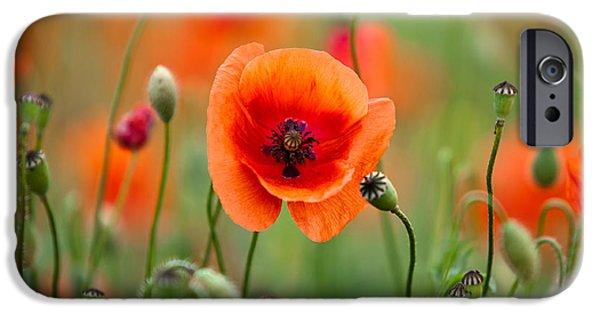 Red Corn Poppy Flowers 07 IPhone Case by Nailia Schwarz