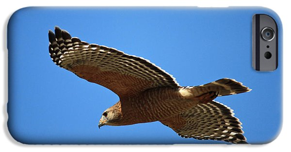 Red Shouldered Hawk In Flight IPhone Case by Carol Groenen