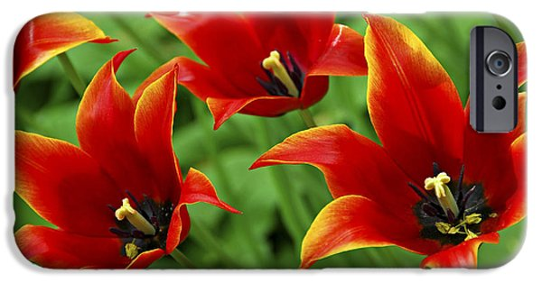 Red Tulips IPhone Case by Elena Elisseeva