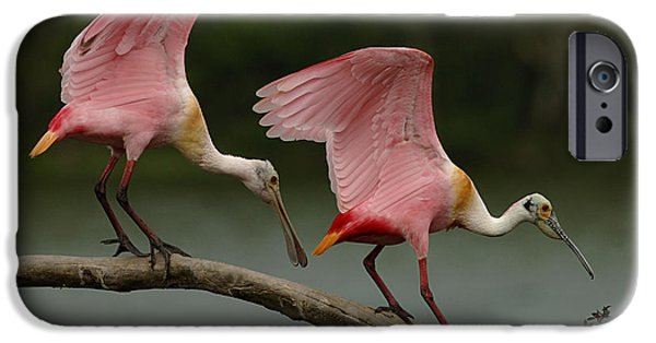 Rosiette Spoonbills IPhone 6s Case by Bob Christopher