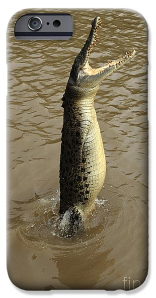 Salt Water Crocodile IPhone 6s Case by Bob Christopher